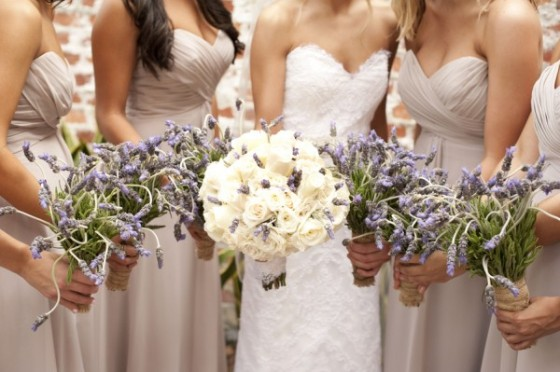 Cream Roses + Lavender
